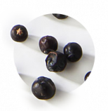 Fifty Pounds Gin Ingredient Juniper Berries